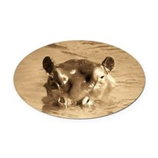 River Hippo Oval Car Magnet