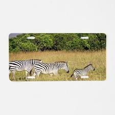 Africa Zebra Herd Aluminum License Plate