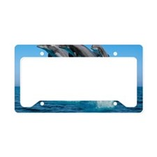 dolphins playing License Plate Holder