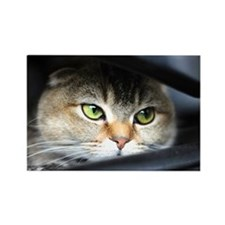 noodles the cat bright green eyes Rectangle Magnet