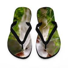 Baby goat Flip Flops