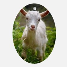 Baby goat Oval Ornament