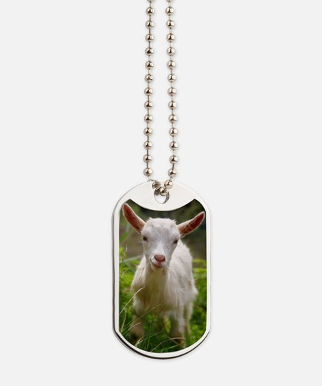 Baby goat Dog Tags