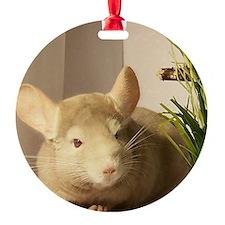 blond ebony chinchilla Ornament