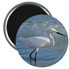 Snowy egret Magnet