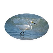 Snowy egret Oval Car Magnet