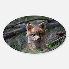 baby fox Sticker (Oval)