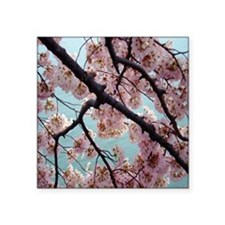 """Pink Cherry Blossoms Square Sticker 3"""" x 3"""""""
