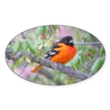 Baltimore Oriole Decal