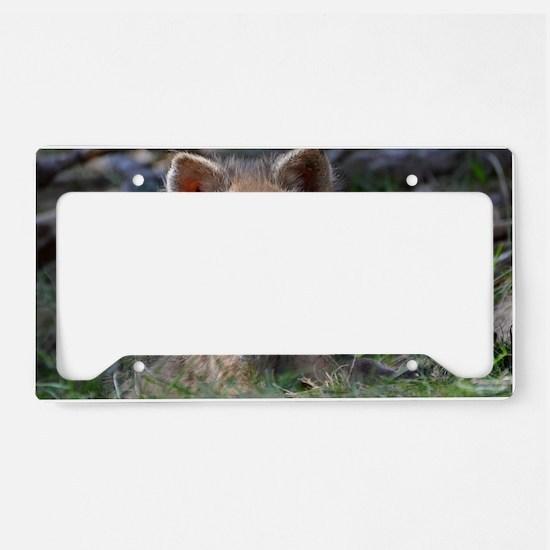 baby fox License Plate Holder