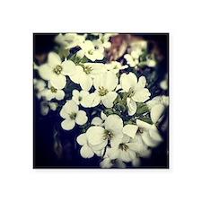 """blossoms brandon Square Sticker 3"""" x 3"""""""