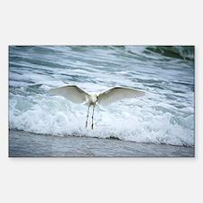 Born of sea-foam Decal
