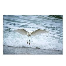 Born of sea-foam Postcards (Package of 8)