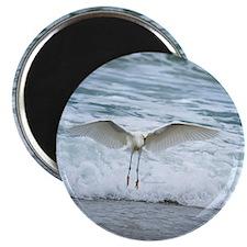 Born of sea-foam Magnet