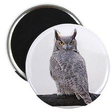 Great Horned Owl-1 Magnet