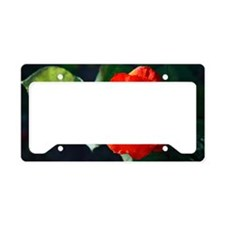 Red rose License Plate Holder