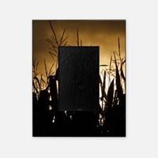 Corn field silhouettes Picture Frame