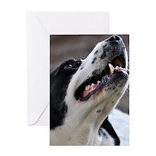 Unique Pet Portraits from Devonshire Greeting Card