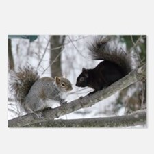 Black and Gray Squirrel Postcards (Package of 8)