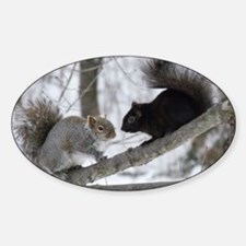 Black and Gray Squirrel Sticker (Oval)