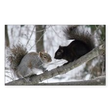 Black and Gray Squirrel Decal