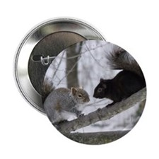 "Black and Gray Squirrel 2.25"" Button"