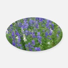 Texas Bluebonnets in Bloom Oval Car Magnet