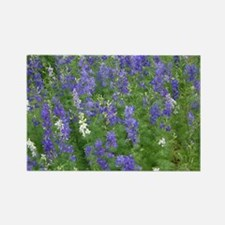 Texas Bluebonnets in Bloom Rectangle Magnet