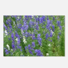 Texas Bluebonnets in Bloo Postcards (Package of 8)