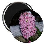 Snow Hyacinth 2.25