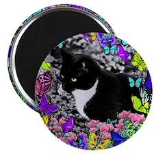 Freckles the Tux Cat in Butterflies II Magnet