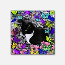 "Freckles the Tux Cat in But Square Sticker 3"" x 3"""