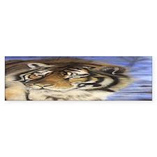Daddys Tiger Bumper Sticker