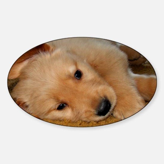 Cooper Wants a Nap Sticker (Oval)