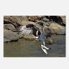 osprey with 2 fish Postcards (Package of 8)