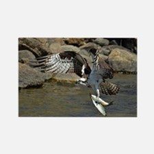 osprey with 2 fish Rectangle Magnet