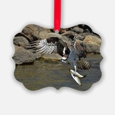 osprey with 2 fish Ornament