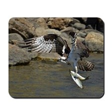 osprey with 2 fish Mousepad