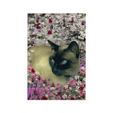 Stella Chocolate Point Siamese Fl Rectangle Magnet