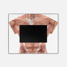 Human body T Picture Frame