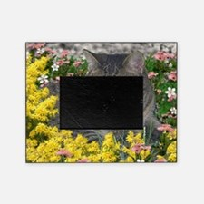 Mimosa the Tiger Cat in Mimosa Flowe Picture Frame