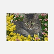 Mimosa the Tiger Cat in Mimosa Fl Rectangle Magnet