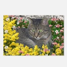 Mimosa the Tiger Cat in M Postcards (Package of 8)
