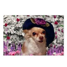 Chi Chi the Chihuahua in  Postcards (Package of 8)