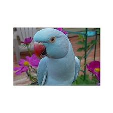 Indian Ringneck Parakeet Closeup Rectangle Magnet