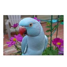 Indian Ringneck Parakeet  Postcards (Package of 8)