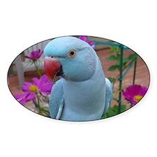Indian Ringneck Parakeet Closeup Decal