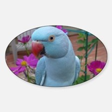 Indian Ringneck Parakeet Closeup Decal