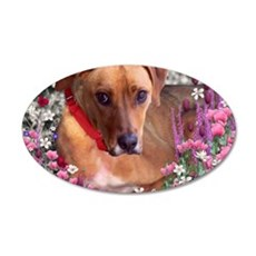 Trista the Rescue Dog in Flo 35x21 Oval Wall Decal