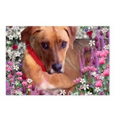 Trista the Rescue Dog in  Postcards (Package of 8)